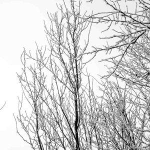 Kuernach - Raureif - 30.12.2016 © Gerald Langer