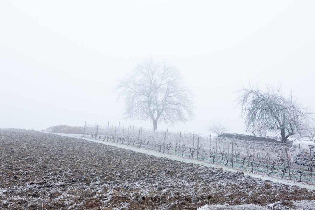 Prosselsheim - Raureif - 31.12.2016 © Gerald Langer