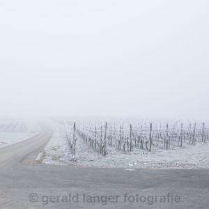 Vogelsburg - 31.12.2016 © Gerald Langer