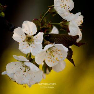 20170409-Kuernach-Pflanzen-©-Gerald-Langer_11_IMG_2149