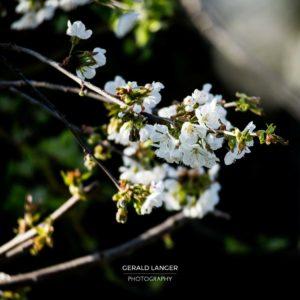 20170409-Kuernach-Pflanzen-©-Gerald-Langer_14_IMG_2152
