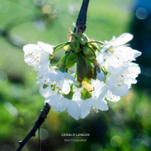 20170409-Kuernach-Pflanzen-©-Gerald-Langer_2_IMG_2140