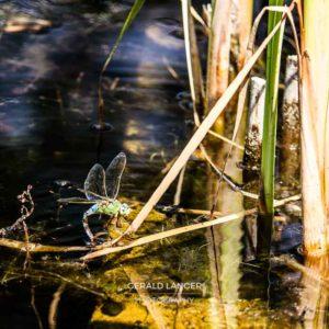Botanischer Garten Wuerzburg 2017 - Makro © Gerald Langer
