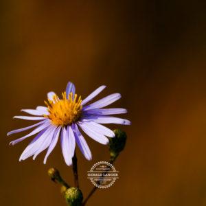 20170923-Botanischer-Garten-Wuerzburg-©-Gerald-Langer_105