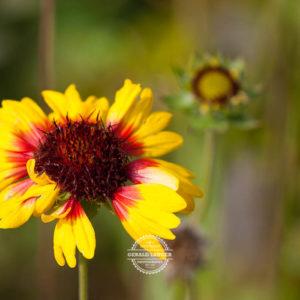 20170923-Botanischer-Garten-Wuerzburg-©-Gerald-Langer_18