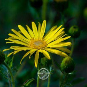 20170923-Botanischer-Garten-Wuerzburg-©-Gerald-Langer_32