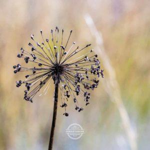 20170923-Botanischer-Garten-Wuerzburg-©-Gerald-Langer_50