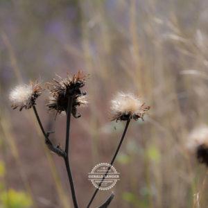 20170923-Botanischer-Garten-Wuerzburg-©-Gerald-Langer_56