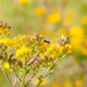 20170923-Botanischer-Garten-Wuerzburg-©-Gerald-Langer_6