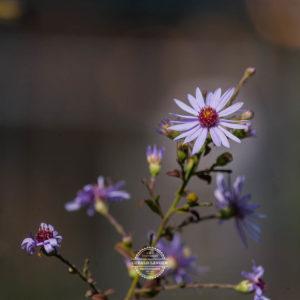 20170923-Botanischer-Garten-Wuerzburg-©-Gerald-Langer_75