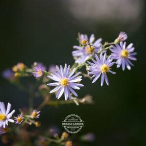 20170923-Botanischer-Garten-Wuerzburg-©-Gerald-Langer_76
