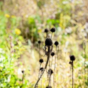 20170923-Botanischer-Garten-Wuerzburg-©-Gerald-Langer_78