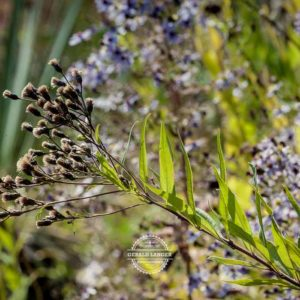 20170923-Botanischer-Garten-Wuerzburg-©-Gerald-Langer_79