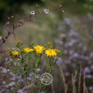 20170923-Botanischer-Garten-Wuerzburg-©-Gerald-Langer_83