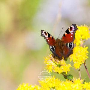 20170923-Botanischer-Garten-Wuerzburg-©-Gerald-Langer_85
