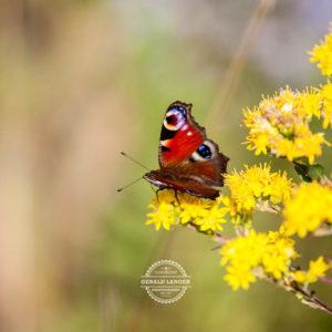 20170923-Botanischer-Garten-Wuerzburg-©-Gerald-Langer_91