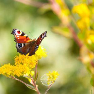 20170923-Botanischer-Garten-Wuerzburg-©-Gerald-Langer_95