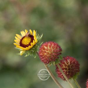 20170923-Botanischer-Garten-Wuerzburg-©-Gerald-Langer_20