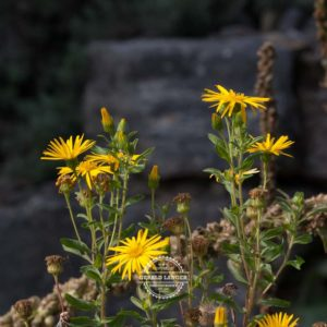20170923-Botanischer-Garten-Wuerzburg-©-Gerald-Langer_24