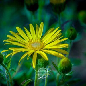 20170923-Botanischer-Garten-Wuerzburg-©-Gerald-Langer_33