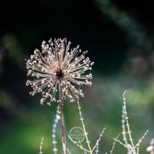 20170923-Botanischer-Garten-Wuerzburg-©-Gerald-Langer_48