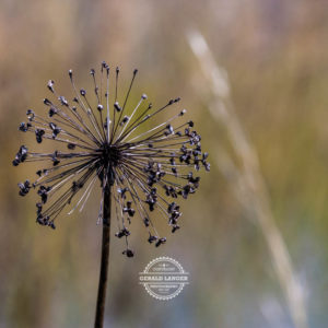 20170923-Botanischer-Garten-Wuerzburg-©-Gerald-Langer_49