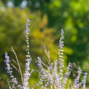 20170923-Botanischer-Garten-Wuerzburg-©-Gerald-Langer_59