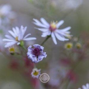 20170923-Botanischer-Garten-Wuerzburg-©-Gerald-Langer_69