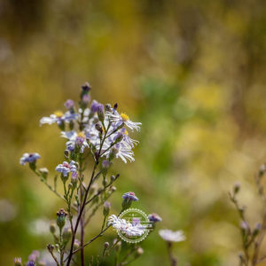 20170923-Botanischer-Garten-Wuerzburg-©-Gerald-Langer_80