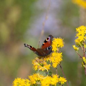 20170923-Botanischer-Garten-Wuerzburg-©-Gerald-Langer_86
