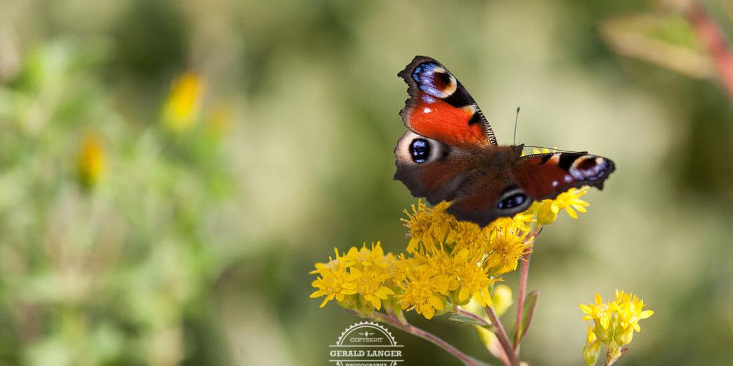20170923-Botanischer-Garten-Wuerzburg-©-Gerald-Langer_94