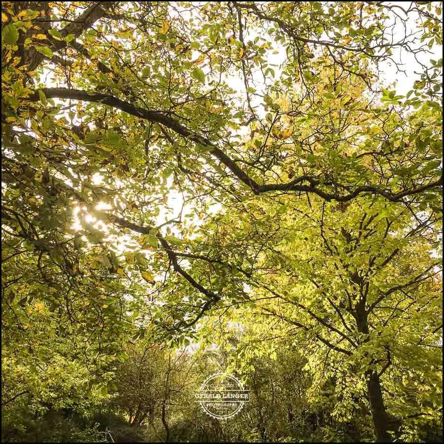 20171008-Herbst-in-Wuerzburg-iPhone-6s-©-Gerald-Langer_12