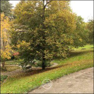20171008-Herbst-in-Wuerzburg-iPhone-6s-©-Gerald-Langer_13