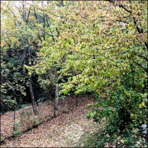 20171008-Herbst-in-Wuerzburg-iPhone-6s-©-Gerald-Langer_22