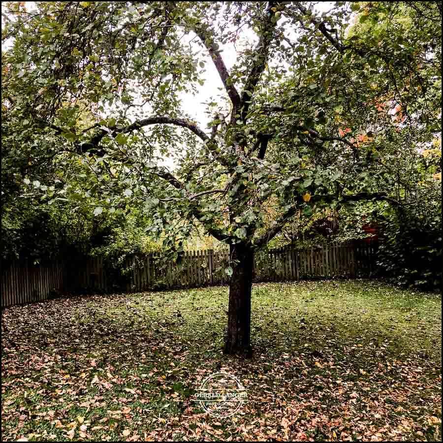 20171008-Herbst-in-Wuerzburg-iPhone-6s-©-Gerald-Langer_24