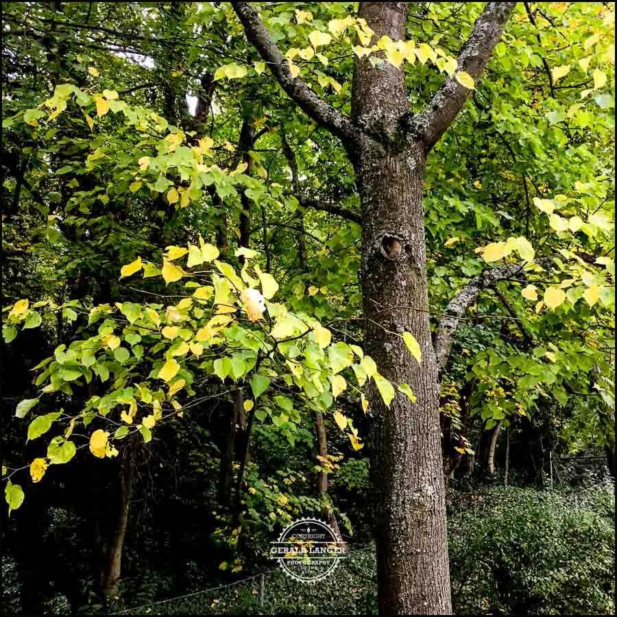20171008-Herbst-in-Wuerzburg-iPhone-6s-©-Gerald-Langer_25
