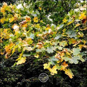 20171008-Herbst-in-Wuerzburg-iPhone-6s-©-Gerald-Langer_27