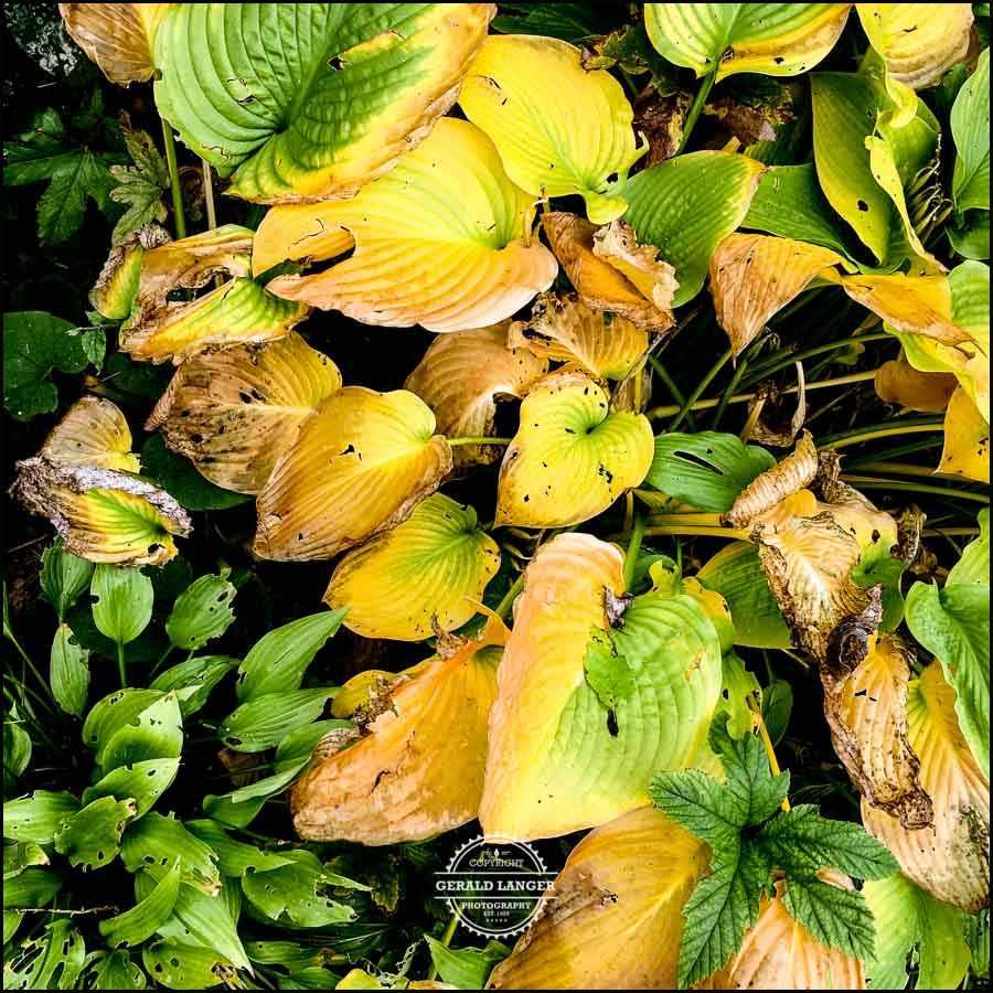 20171008-Herbst-in-Wuerzburg-iPhone-6s-©-Gerald-Langer_38