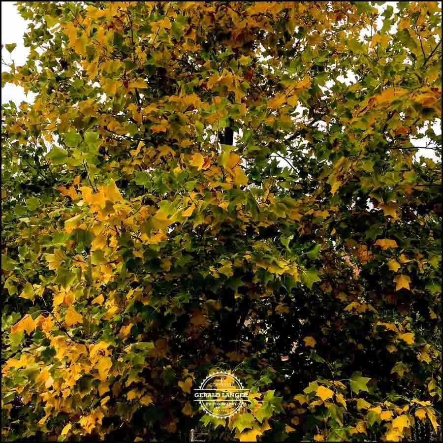20171008-Herbst-in-Wuerzburg-iPhone-6s-©-Gerald-Langer_39