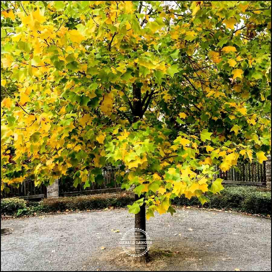 20171008-Herbst-in-Wuerzburg-iPhone-6s-©-Gerald-Langer_40