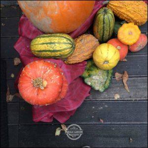 20171008-Herbst-in-Wuerzburg-iPhone-6s-©-Gerald-Langer_6