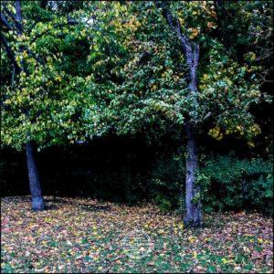 20171008-Herbst-in-Wuerzburg-iPhone-6s-©-Gerald-Langer_23