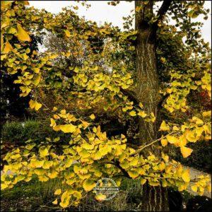 20171008-Herbst-in-Wuerzburg-iPhone-6s-©-Gerald-Langer_34