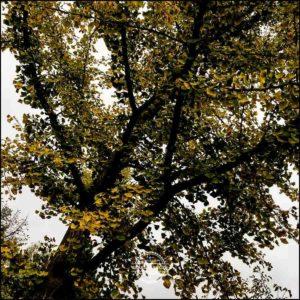 20171008-Herbst-in-Wuerzburg-iPhone-6s-©-Gerald-Langer_35