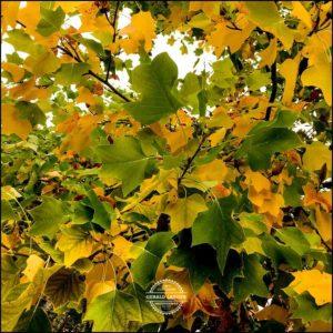 20171008-Herbst-in-Wuerzburg-iPhone-6s-©-Gerald-Langer_43