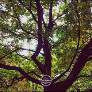 20171008-Herbst-in-Wuerzburg-iPhone-6s-©-Gerald-Langer_7