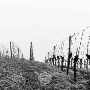 20180127-Vogelsburg-am-Main-©-Gerald-Langer_12