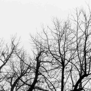 20180127-Vogelsburg-am-Main-©-Gerald-Langer_15