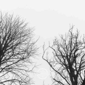 20180127-Vogelsburg-am-Main-©-Gerald-Langer_9