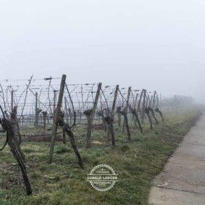 20180127-Vogelsburg-am-Main-©-Gerald-Langer_10